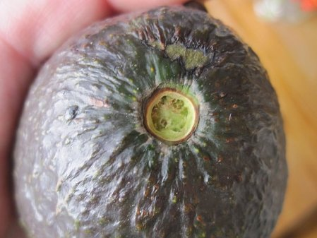 This avocado is ripe!