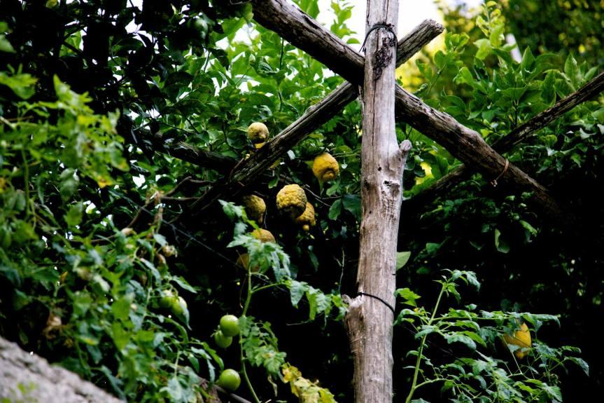 Ravello-Lemons